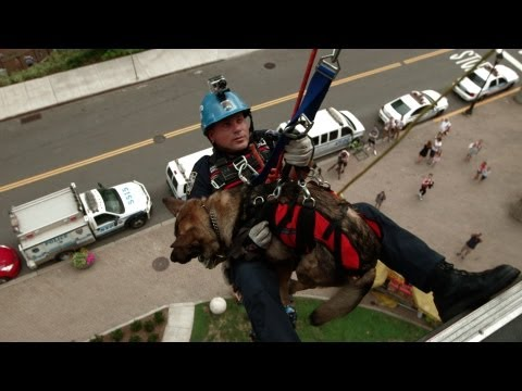 Training With NYPD's Canine Cops