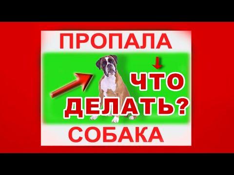 Как писать объявление о пропаже собаки