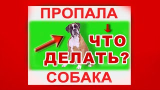 Пропала собака? - 11 советов как найти! 🅟🅞🅘🅢🅚🅩🄌🄌.🅡🅤