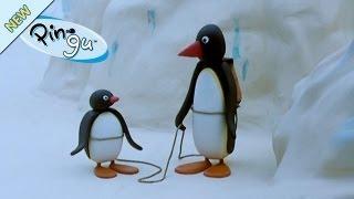 Kijk Pingu gaat bergbeklimmen filmpje