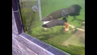 Monster Fish Glass Pond
