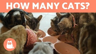 How Many CATS Can You Keep at HOME? 🐱🏠