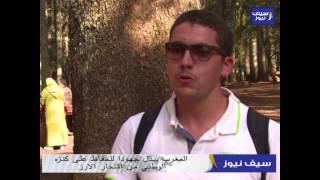 المغرب يبذل جهودا للحفاظ على كنزه الوطني من اشجار الارز