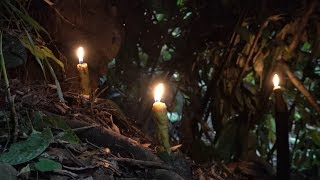 Make candles, survival in the tropical rainforest, ep 38