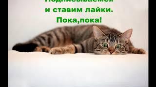 Смешные кошки.Если забыл покормить кота. Кот украл.Смешная подборка про кошек.Приколы с котами.