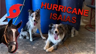 Prepping my horses for hurricane Isaias! / Puppy runs barrel pattern!