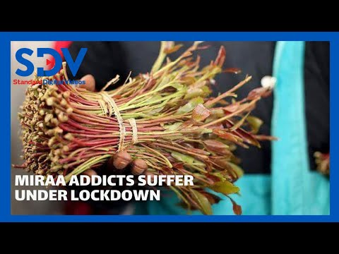 Dealing with addiction: Miraa addicts suffer in countries under lockdown during this pandemic