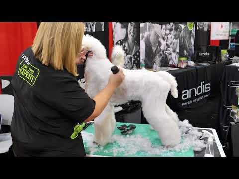 Standard Poodle Trim with Tammy Siert