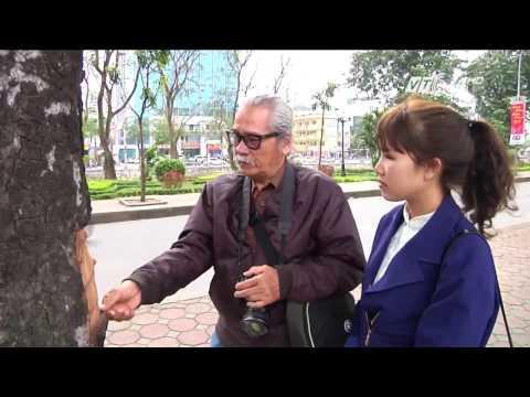 (VTC14)_Hà Nội: Hàng chục cây xà cừ cổ thụ bị đục khoét sau tết
