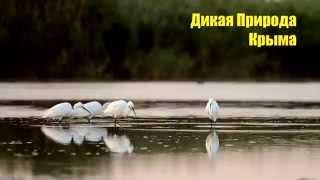 Дикая природа Крыма.