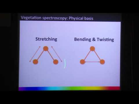 Plant Traits/Imaging Spectroscopy