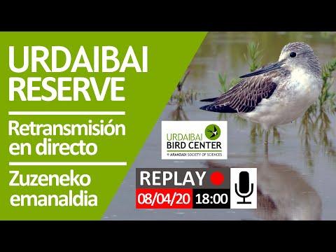 retransmisión-en-directo-2020-04-08,-sesión-de-tarde-(18:00)