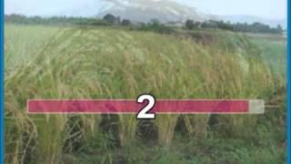 NGÀY XUÂN NGUYỆN ƯỚC - Ca khúc Thiên Kiều Giang