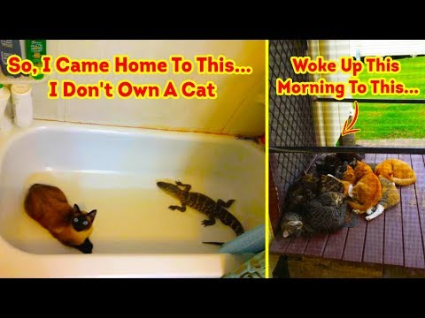 The Best ' I Dont Own A Cat ' Moments That Have Ever Happened To Humans