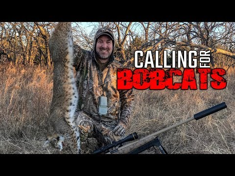 Calling For Bobcats