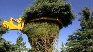 Pemeliharaan Mesin Pertanian Berat - TEKNOLOGI INVENTARIS Pindah Pohon Besar