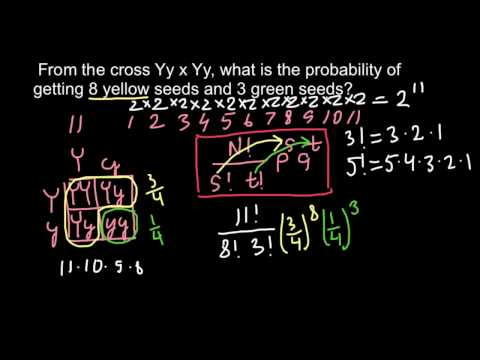 Genetics and law of probability (advance level)