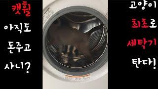 세탁기 타는 샴고양이 아깽이!