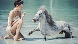 The most beautiful horses of the world Самые красивые лошади мира YouTubeFotoVideo