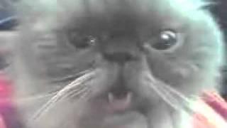 Кот бля 2