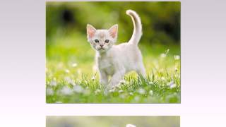 Día Internacional del Gato.