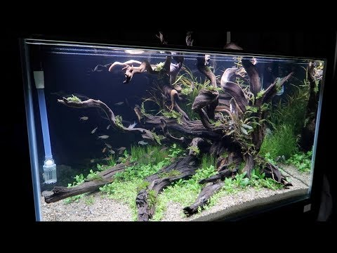 Get Inspired! An Aquascaping Tour