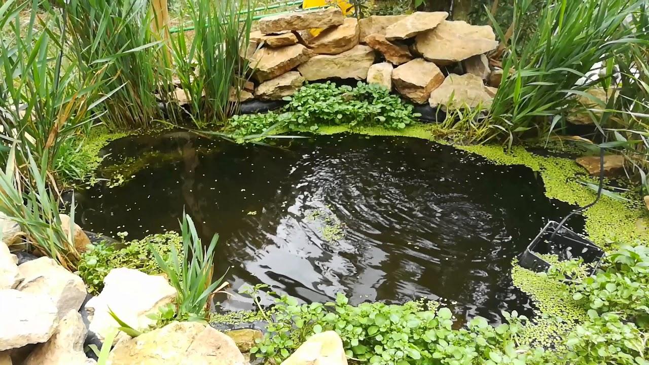 bassins naturel sans filtre