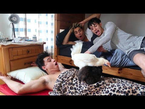 LUCAS AND MARCUS GOT US BACK!