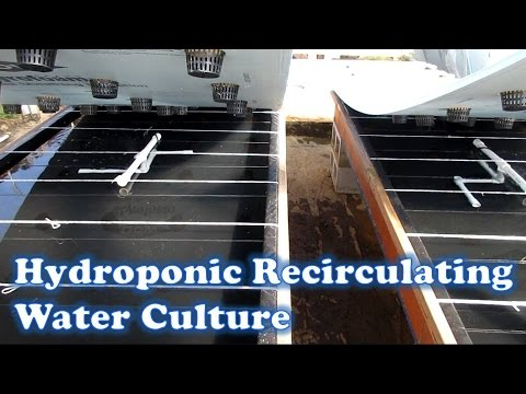 Hydroponic Recirculating Water Culture Beds