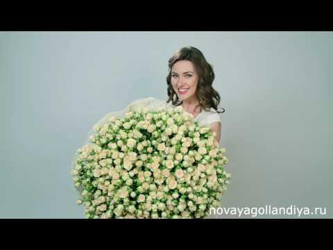 101 кустовая роза. Цветы Новая Голландия. 101 роза.