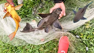 giant-net-trap-captures-spiny-armored-catfish