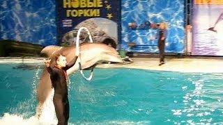 Крым Ялта Театр морских животных Акватория
