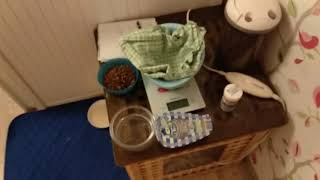 Первые дни после родов собаки. Уход за новорожденными щенками.