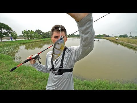 Pond SPEED Challenge! (loser gets...)