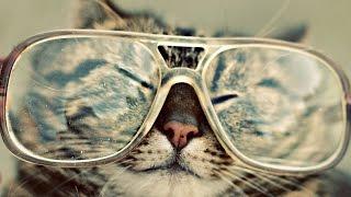 Крутые коты =^_^=
