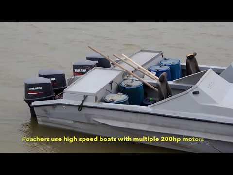 Russian Caspian Poachers Hunting For Beluga, Sturgeon And Black Caviar