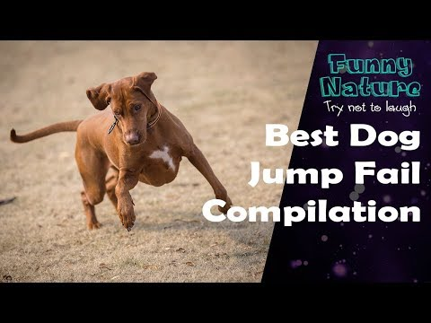 Funny Dogs Jump Slow Motion Vines Fails -  try not to laugh - FunnyNature