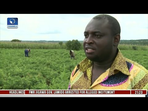 Eco@Africa: Tobacco Is Malawi's Most Important Export