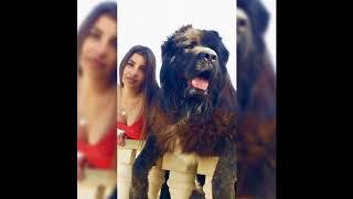 世界で最大の15匹の犬 ... このビデオには、世界で生きている生きている...
