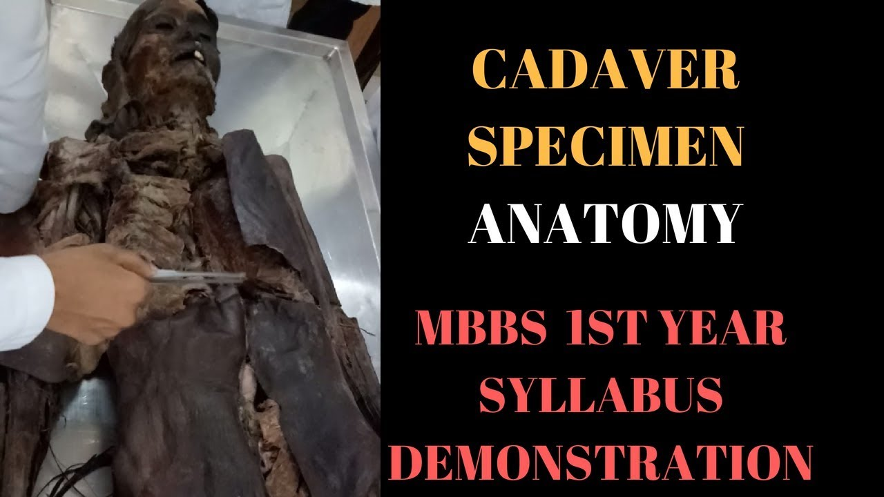 cadaver specimen human body ANATOMY mbbs first year SYLLABUS - YouTube