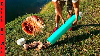 ISOPOD crab TRAP diy!
