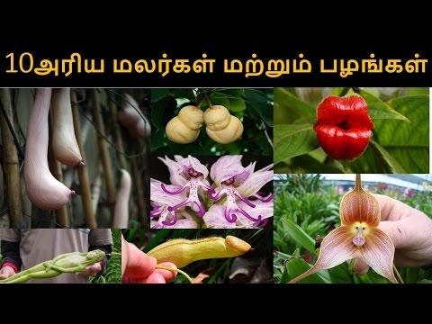 10 Different Types of Flowers & Fruits as like Human Beings   10 அரிய மலர்கள் மற்றும் பழங்கள்