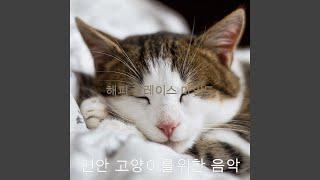 마음을 달래주는 고양이 훈련의 추억