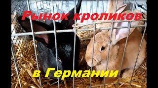 Птичий рынок в Германии. Где немцы покупают кроликов.Кролиководство.