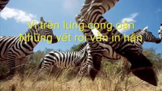 Vết thù trên lưng ngựa hoang (Elvis Phương)