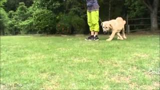 大型犬のお問合せはこちらから http://www.masaki-collection.jp/
