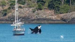 Island Adventures - Washington Whale Watching