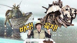 '바다소라게' '육지소라게' 전격비교! 크기부터 달라..