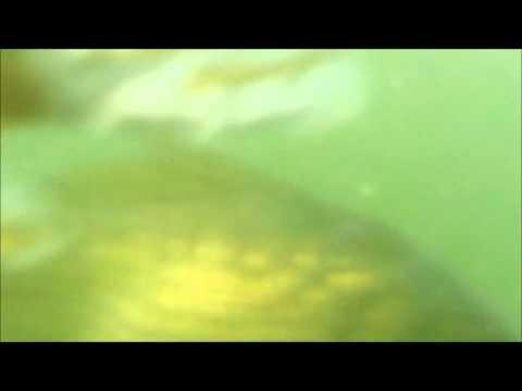 AgfaPhoto EClipse Explorer - Underwater Video