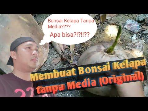 Menanam Bonsai Kelapa Tanpa Media Original Youtube